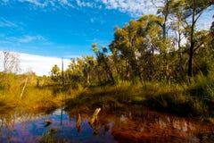Дождевой лес против голубого неба Стоковая Фотография RF