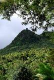 Дождевой лес Пуэрто-Рико El Yunque Стоковая Фотография RF