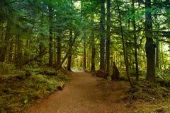 Дождевой лес Стоковая Фотография RF