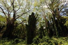 Дождевой лес Стоковое Фото