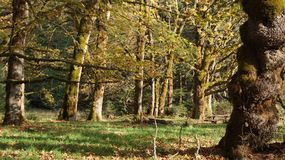 Дождевой лес Стоковые Изображения