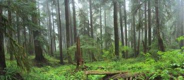 Дождевой лес Hoh стоковые фотографии rf