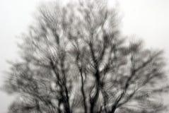 Дождевые капли запачканные деревом Стоковые Изображения RF