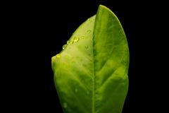 Дождевые капли макроса Стоковые Фотографии RF