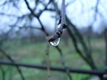 Дождевые капли на ветви Стоковое Фото