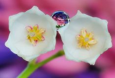 Дождевые капли на цветках, фотографии макроса Стоковые Изображения RF