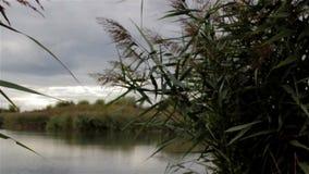 Дождевые облако над озером сток-видео