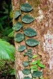 Дождевый лес бедствия плащи-накидк, Австралия Стоковое Фото