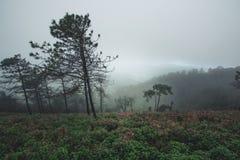 Дождливый день леса туризма природы Стоковое фото RF