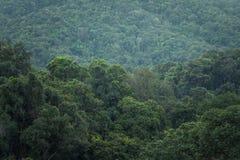 Дождливый день леса туризма природы Стоковые Фото