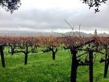 Дождь в виноградниках Стоковая Фотография