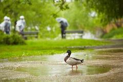 Дождь в городе Стоковая Фотография