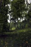 Дождь в роще березы весны Стоковые Фотографии RF