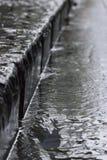 Дождь в сточной канаве Стоковые Фото