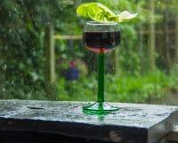 Дождь лета свежий в саде Стоковое Изображение