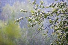 Дождь лета Стоковая Фотография