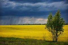 Дождь и облака над полем Стоковое фото RF