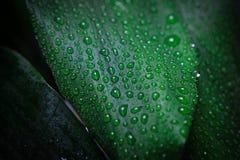 Дождь и падения Стоковое Фото