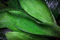Дождь и падения Стоковое фото RF