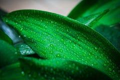 Дождь и падения Стоковые Фотографии RF