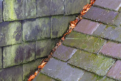Дождь и прессформа на шиферах крыши Стоковое Фото