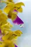 Дождь на цветке Стоковые Фото