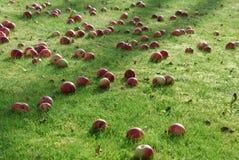 Дождь Яблока Стоковая Фотография RF
