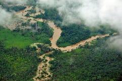 Дождь Forrest Стоковые Изображения