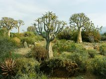 Доисторический сад стоковая фотография