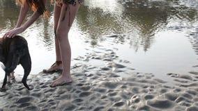 Доисторический человек играя с собакой на пляже видеоматериал