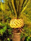 Доисторическое дерево Стоковые Изображения RF