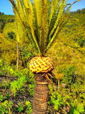 Доисторическое дерево Стоковые Фотографии RF
