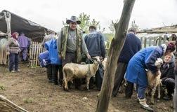 Доить овец в Brezovica на домочадце горы Стоковые Фотографии RF