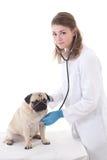Доктор ветеринара женщины проверяя собаку при стетоскоп изолированный на белизне стоковое фото