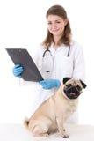 Доктор ветеринара проверяя собаку мопса изолированную на белизне стоковое фото