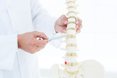 Доктор показывая анатомический позвоночник с его ручкой Стоковые Изображения RF