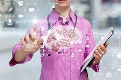 Доктор рассматривая человеческий мозг стоковое изображение