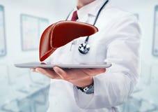 Доктор с стетоскопом и печенью на таблетке в руках в больнице Стоковая Фотография RF