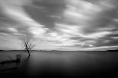 Долгая выдержка дерева на озере, с совершенно все еще водой Стоковое Изображение