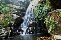Долгая выдержка снятая водопада в Rockgarden, Darjeeling стоковое изображение rf