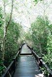 Долгий путь среди леса стоковое фото