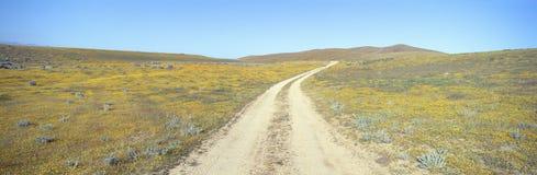 Долина антилопы, Стоковые Фотографии RF
