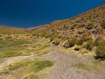 Долина боливийских гористых местностей зеленая Стоковые Изображения