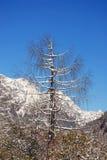 долина вала горы Стоковая Фотография RF