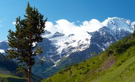 долина вала сосенки горы одичалая Стоковое фото RF