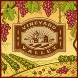 Долина виноградника Стоковая Фотография