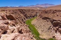Долина в каньоне вполне зеленой растительности стоковое изображение rf