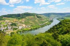 Долина Германия Мозель: Взгляд к реке Мозель около деревни Puenderich и Marienburg рокирует - винодельческий регион Mosel, Герман Стоковое Изображение