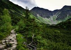 Долина горы с скалистыми саммитами после дождя Стоковые Изображения RF