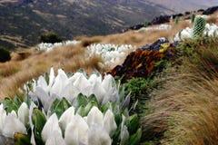 долина горы Стоковые Фотографии RF